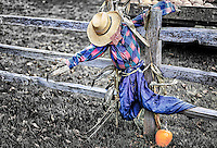 Hanging Around: A straw filled scarecrow is draped on a wooden fence for Halloween, Agassiz British Columbia, Canada. <br />                                                                          <br />                                     This black and white photograph has selective colour reintroduced to the scarecrow and the small pumpkin on the ground.
