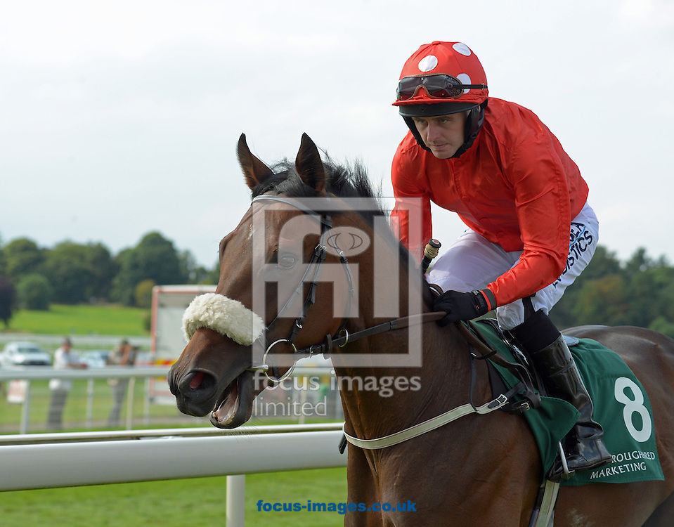 A preview of this weekend's favourites in UK racing.<br /> Picture by Martin Lynch/Focus Images Ltd 07501333150<br /> 13/10/2016<br /> <br /> <br /> Original Caption:<br /> Ribchester at York 22-8-15.