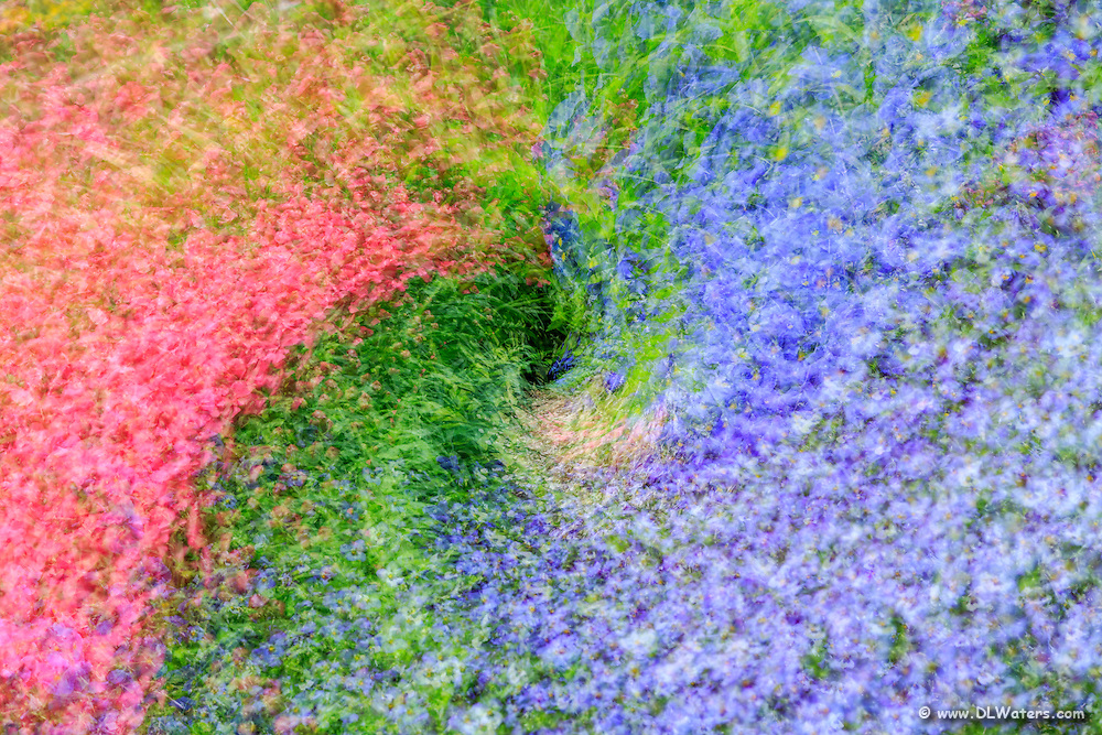9 multiple exposures of flowers combined together while spinning and zooming the camera created this photograph.