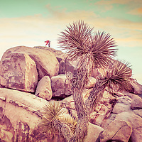 Rock climber bending over with joshua tree next to him.