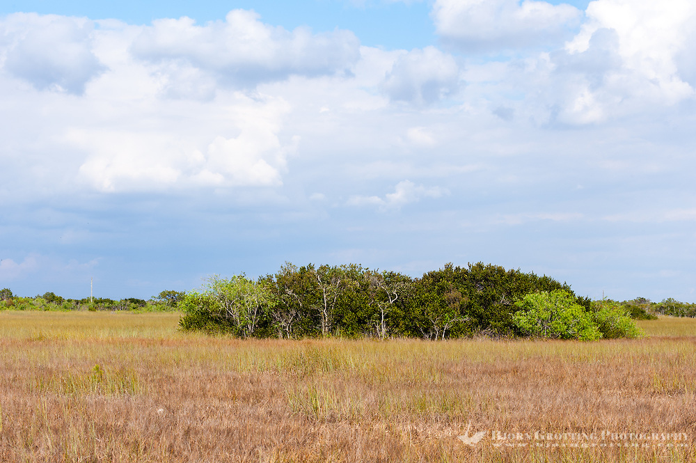 US, Florida, Everglades, Shark Valley. Sawgrass prairie.