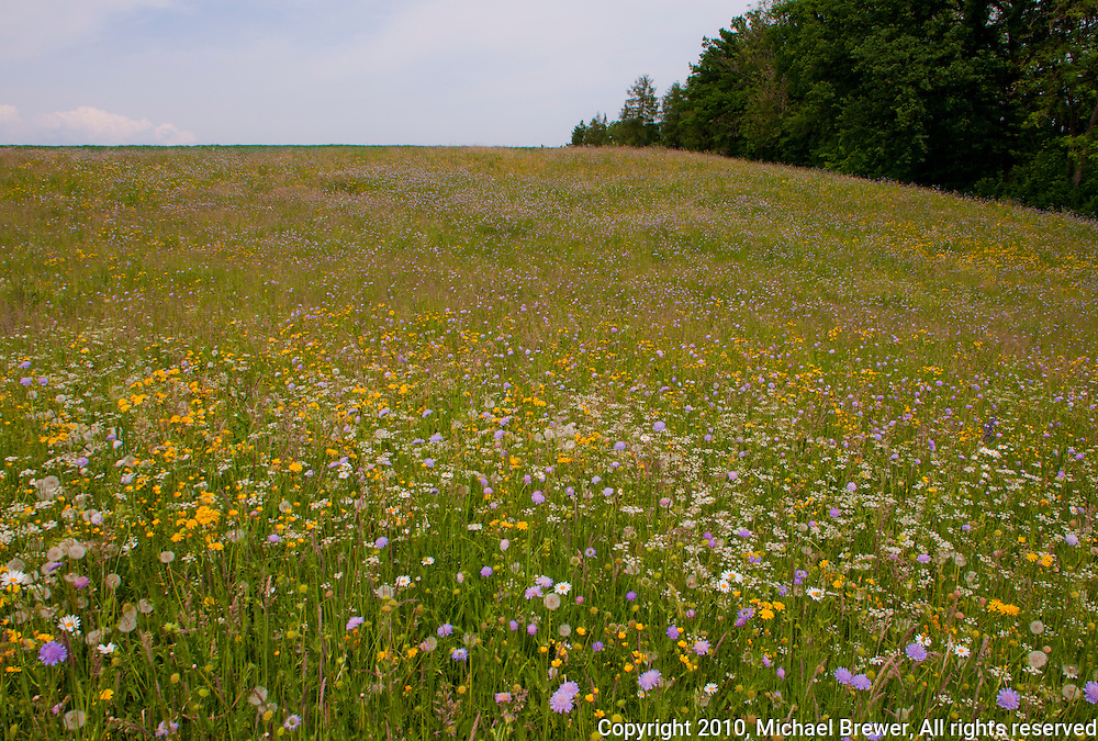 A beautiful landscape in Aargau, Switzerland in spring with a meadow full of wildflowers.