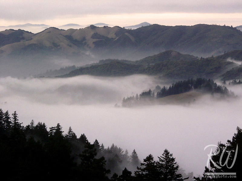 Fog in Valley Below Bolinas Ridge, Mount Tamalpais State Park, California
