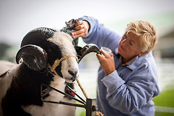 © Licensed to London News Pictures. 11/07/2017. Harrogate UK. Sheila Wood applies baby oil to the horns of her Jacob sheep before showing at the Great Yorkshire Show in Harrogate this morning. The great Yorkshire show is Englands Premier Agricultural event & is expected to attract over 130,000 visitors over the three day period. Photo credit: Andrew McCaren/LNP