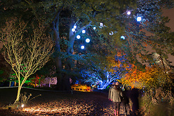 © Licensed to London News Pictures.24/11/2013. London, UK. Gardens lit up by colourful lights in Enchanted Woodland at Syon Park. Enchanted Woodland is an illuminated trail, laid out through the gardens and arboretum of Syon during the festive season. Photo credit : Peter Kollanyi/LNP