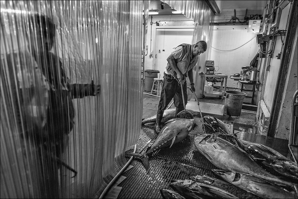 Pelenato,  head fish gaffer at the Commercial Fishing Village at Pier 38.  Every night at 1am Pelenato and his team start unloading and sorting tons of fish and prepare them on pallets for the daily auction which begins at 5:30am.