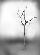Title: Roots<br /> Date: 2013<br /> Dimensions: 8&quot;x10&quot;<br /> Media: Archival Inkjet Print