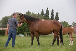 Marc Kluskens (BEL) <br /> Stoeterij van 't Roosakker - Sint Gillis Waas 2013<br /> © Dirk Caremans