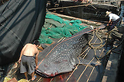 BEIHAI, CHINA - MAY 12:(CHINA OUT) <br />