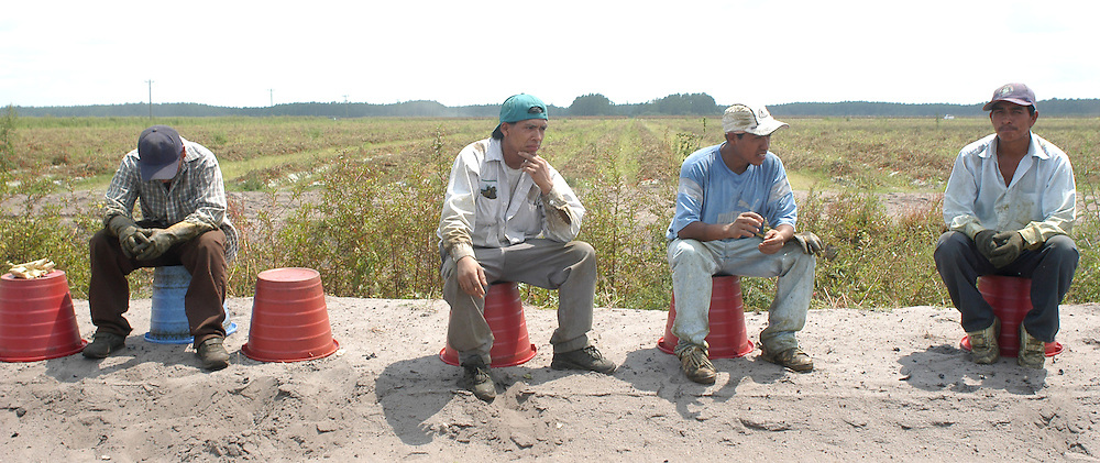 Migrant farm workers  take a break in tomato field in Immokalee, FL, Apr. 17, 2003.  Workers are paid 40 to 45 cents per 30 pound bucket, which is the same rate they were paid in 1980s. In order to make $50 a day, they pick and haul 125 buckets or two tons of tomatoes. To make that quota, pickers work fast, picking, filling, hauling, and throwing buckets.
