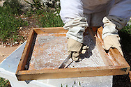Traces of dried sugar amalgumate on the wooden trays inside the hives. This sugar must be chiseled off by hand before the trays can be washed down to complete the cleaning process.<br /> Bil'in, Ramallah, West Bank, Palestine.