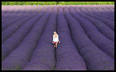 Lavender Festival 15-7-12