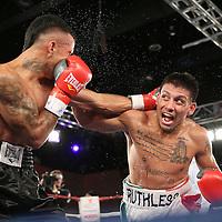 Toribio Ramirez (White Shorts) fights Cesar Cisneros during a Telemundo boxing match at the A La Carte Pavilion  on Friday, August 1, 2014 in Tampa, Florida. (AP Photo/Alex Menendez)