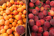 Concord, MA USA Aug 02, 2014 —Peaches and apricots in boxes at a farm stand in Massachusetts.