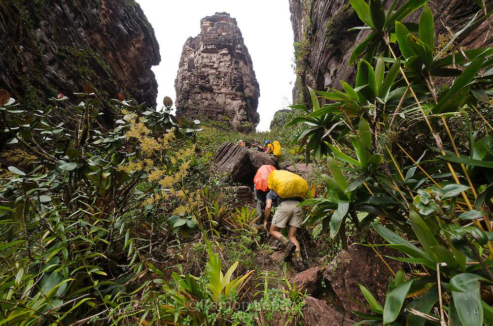 """AUYANTEPUY, VENEZUELA. Excursionistas durante ascenso al tepuy. El Auyantepuy es el mayor de los tepuis del Parque Nacional Canaima. En sus 700 kms2 alberga el salto angel o conocido por lengua indígena Pemon como """"Kerepacupai Vena; es la caída de agua más grande del mundo con sus 979 metros de altura. (Ramon lepage /Orinoquiaphoto/LatinContent/Getty Images)"""