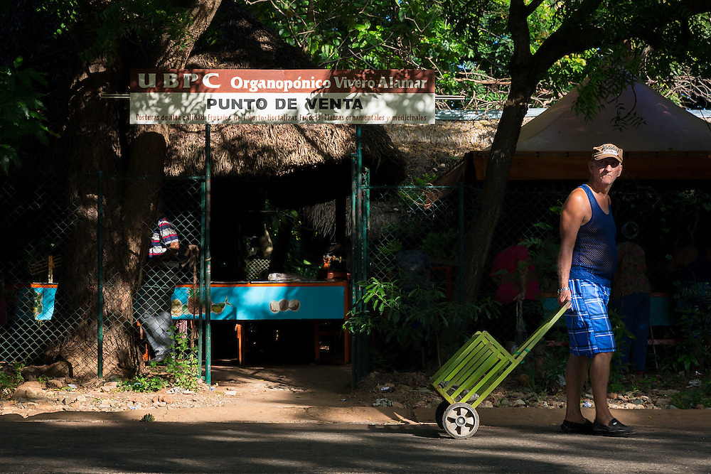 A man exits the Vivero Alamar organoponico in the Alamar municipality of Havana, Cuba. Organoponicos are publically-run urban organic gardens in Cuba aimed at addressing the country's food supply shortages.  (David Albers/Staff)