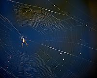 Spider and Web. Winter Nature in Florida Image taken with a Nikon D4 camera and 80-400 mm VRII telephoto zoom lens