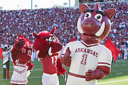 LITTLE ROCK, AR - SEPTEMBER 8:   Mascots of the Arkansas Razorbacks before a game against the Louisiana-Monroe Warhawks at War Memorial Stadium on September 8, 2012 in Little Rock, Arkansas.  The Warhawks defeated the Razorbacks 34-31.  (Photo by Wesley Hitt/Getty Images) *** Local Caption ***