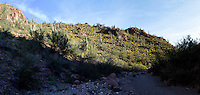 Saguaro National Park arroyo, A wash in the desert.