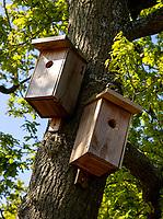 WASSENAAR / Den Haag - Koninklijke Haagsche Golf Club . vogelhuisjes, vogels, nestkast,    COPYRIGHT KOEN SUYK