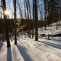 Trees shadows and a stone wall in a forest near the Ashuelot River in Surry, New Hampshire.  Winter.