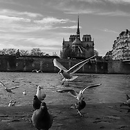 France. Paris. 4th district. quai  d Orleans along the Seine river , on Saint Louis island. in the distance Notre dame Cathedral   / Quai d Orleans sur l ile Saint Louis,