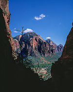 Zion Canyon viewed from Refrigerator Canyon,  Zion National Park,  (This image is on permanent display at National Park visitor faclilities) (medium format original)  © 1998 David A. Ponton