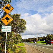 Warning sign on the side of the road warning of Koala and kangaroo crossing