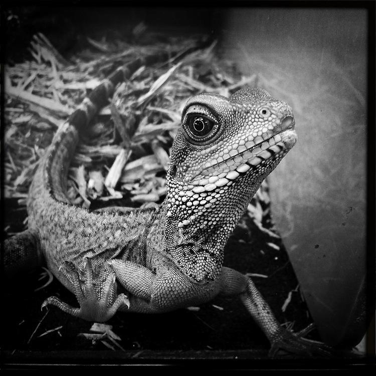 Water dragon 2 - Houston, Texas