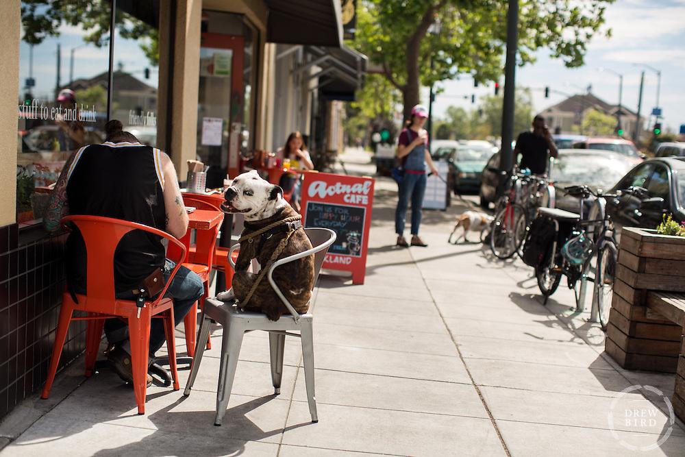 Drew Bird Photography | San Francisco Photographer | Bay Area Photographer | East Bay Photographer | Oakland Photographer | Berkeley Photographer | Actual Cafe Oakland | Dog | Street Photographer