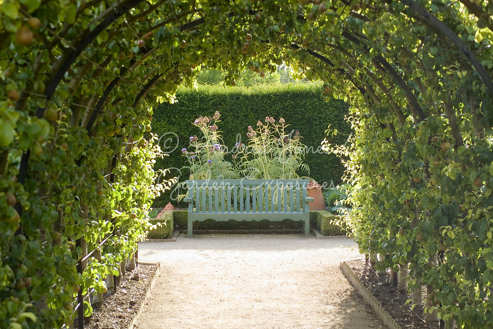 View through pear arbours to bench with Cynara cardunculus 'Bianco Avorio' (cardoon 'Bianco Avorio') on left and Cynara cardunculus 'Florist Cardy' (cardoon 'Florist cardy') on right in the Vegetable Garden at West Dean Gardens, West Sussex, England