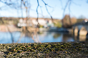 Henley, Oxfordshire. England General Views Henley Town  Moss growing on the stone parapet of Henely Bridge  <br /> <br /> Thursday  01/12/2016<br /> © Peter SPURRIER<br /> LEICA CAMERA AG  LEICA Q (Typ 116)  f1.7  1/1000sec  35mm  5.2MB