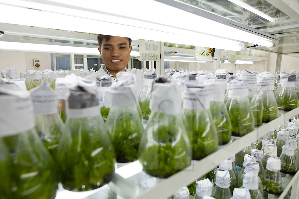A scientist handles flasks containing rice samples for genomics research at LMI RICE Laboratory, Agricultural Genetics Institute, Pham Van Dong Street, Hanoi, Vietnam, Southeast Asia