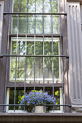flowers behind bars in New York City