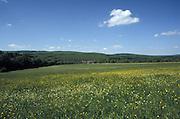 Deutschland Germany,Hessen.Hessen Rheingau.Wiese mit Ebentaler Hof (bei Ruedesheim), Rheingau-Taunus im Hintergrund.Meadow with farm, hills of Taunus in background...