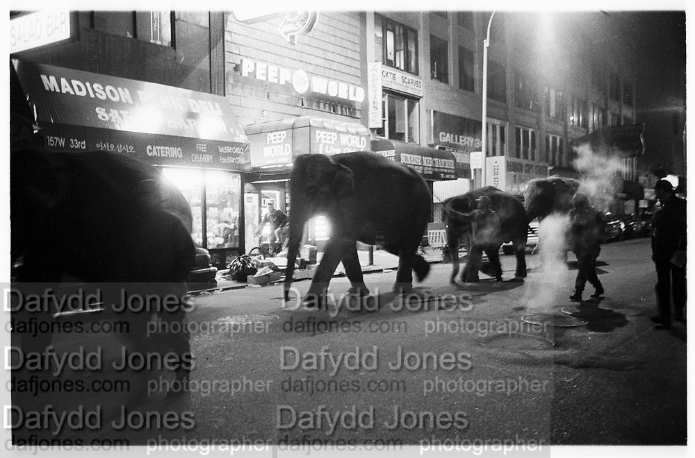Elephants walking through midtown Manhattan at 1. a.m. to the Circus. © Copyright Photograph by Dafydd Jones 66 Stockwell Park Rd. London SW9 0DA Tel 020 7733 0108 www.dafjones.com