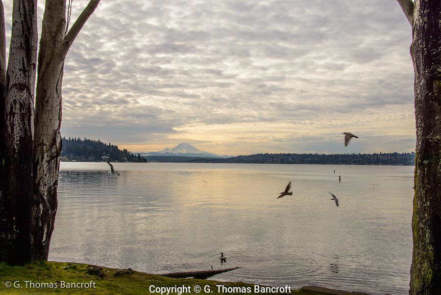 Mt Rainier stands promenently at the end of Lake Washington