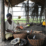 (Benin March 1, 2008  Beninese woman selling in informal fish market in harbor