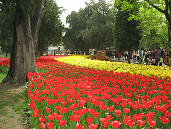 July 18, 2017 - Beijing, Beijing, China - Beijing, CHINA-(EDITORIAL USE ONLY. CHINA OUT) Flowers including tulips blossom in Zhongshan Park, Beijin. The Zhongshan Park is a former imperial altar and now a public park that lies just southwest of the Forbidden City in the Imperial City, Beijing. (Credit Image: © SIPA Asia via ZUMA Wire)
