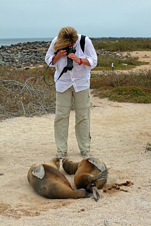 South America, Ecuador, Galapagos Islands. Photographing Sea Lions.