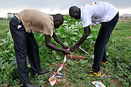 A MAG community liaison team marking a mortar in an area where a huge number of unexploded ordinance were found just opposite John Garang's tomb in Juba as the area was being prepared for South Sudan independence ceremonies. The Government of South Sudan called on Mines Advisory Group (MAG) to assist SPLA deminers in an attempt to clear the area and make it safe for the thousands of people and dignitaries who will be attending the declaration of independence on July 9th..Juba, South Sudan. 04/07/2011..Photo © J.B. Russell