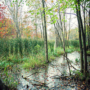 Thousand Acre Swamp_RYP Tour Image