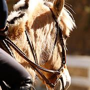 Topline Equestrian Clinic