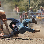 Gus Spence from Balclutha in action as he misses his steer and crashes to the ground during the Open Steer Wrestling competition at the Wanaka Rodeo. Wanaka, South Island, New Zealand. 2nd January 2012