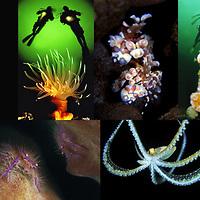 Portfolio Antibe Underwater Festival earning Silver medal 2006. Photographer Magnus Lundgren.
