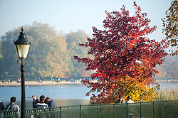 © Licensed to London News Pictures. 01/11/2015. London, UK. A tree displaying a full rage of autumn colours, from green through to deep red, in Hyde Park, Central London.  Photo credit: Ben Cawthra/LNP