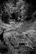 """Landslip, one of thousands in Sarawak's Borneo rainforest, where the lifeline logging road for Long Lellang has almost been severed.  Once the rainforest, with its network of shallow roots in shallow topsoil is removed, the often torrential rains slice away the organic topsoil and the inorganic sub-soil like a knife through butter.  This road was part of a kind of """"deal with the devil"""" the Kelabit community made with Shin Yang Group logging company to permit the logging conglomerate to ravage the Borneo rainforest bordering the road up into the adjacent mountains.  Without the logging, there would be no road, no rudimentary road maintainance.  Now there may be not maintainance anyhow, deal or no.  Between Long Lellang and Long Kelamu, Sarawak, Malaysia."""