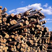 Freshly cut logs near a sawmill in Maine, USA