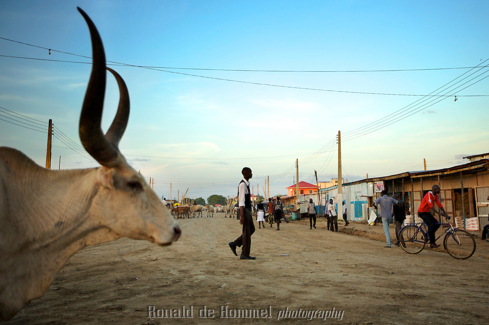 During the rainy season cattle farmers of South Sudan move their stock to higher ground. Cities like Bor, the Capital of Jonglei State provide relatively safe shelter for the precious animals.
