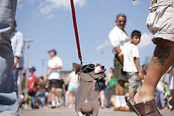 Stock photo of a small dog with sunglasses being walked at the park